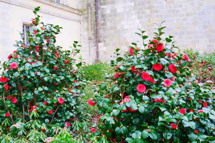 Fontainebleau 9